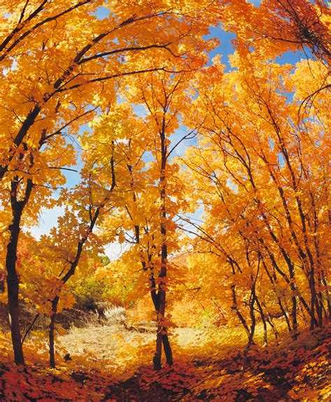 Fun Fall Activities For The Family, Couples, Or Yourself