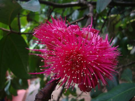 flowers and flowers: FLOWER IN TREES