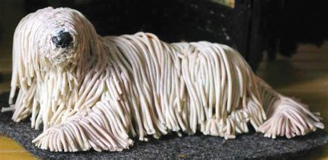 Everything about your Komondor - LUV My dogs
